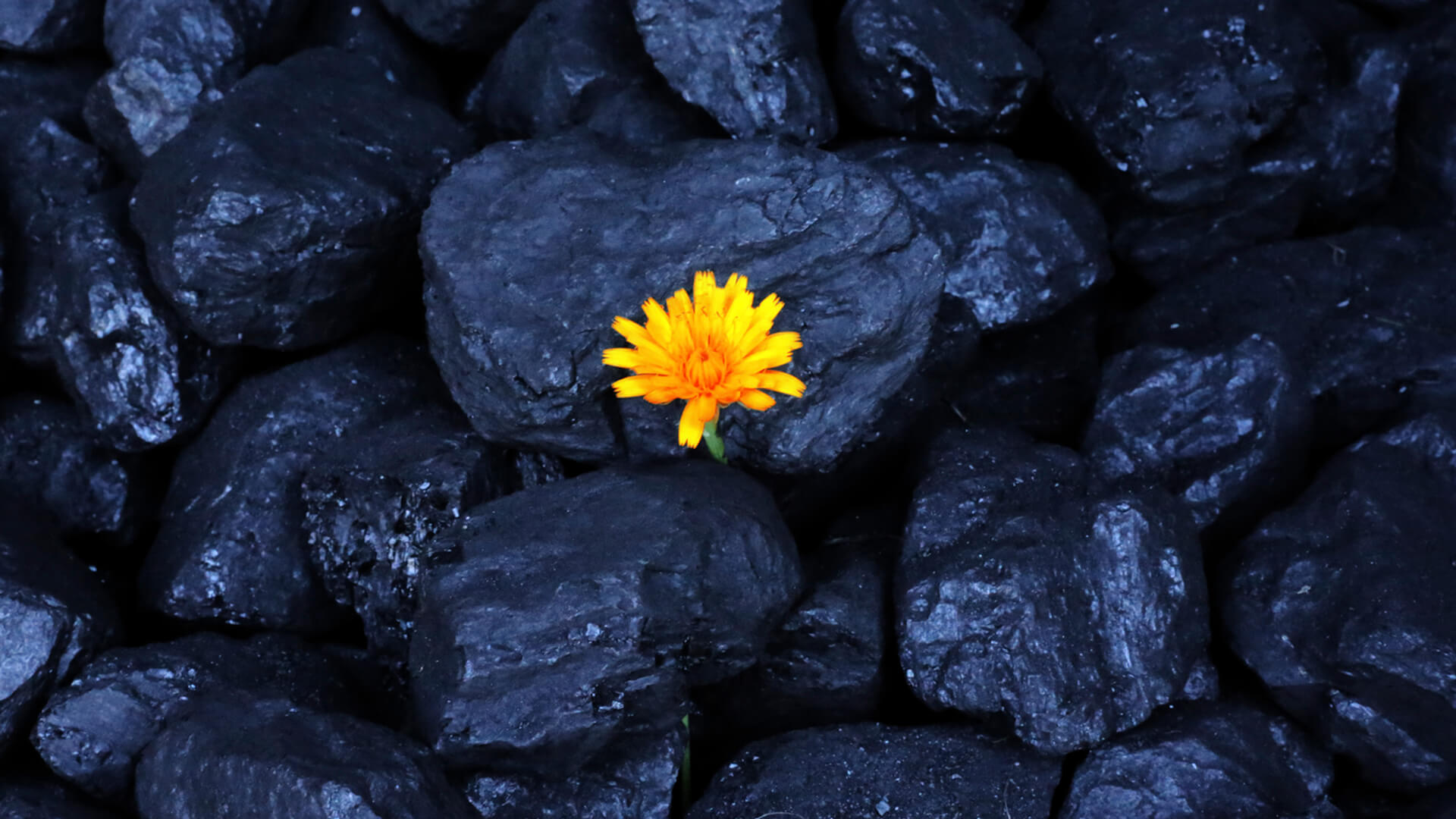 All You Need to Know About Shungite Water and Its Benefits
